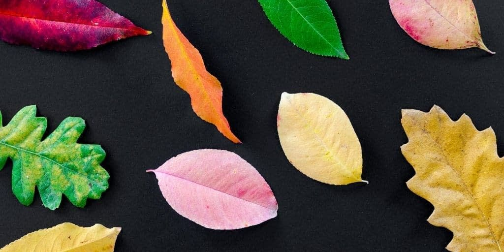 Autumn Trees Natural Home Scent Collection by Twoodle Co