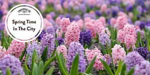 Spring Time in the City – London in Bloom